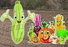 ✅ совместимость петрушки с другими овощами: с какими растениями - tehnomir32.ru