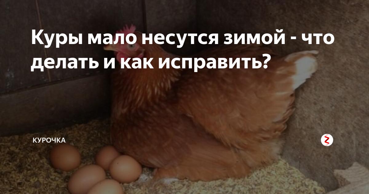Как увеличить яйценоскость кур зимой? секреты и советы.
