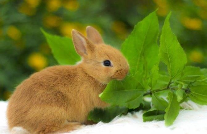 Можно ли кроликам петрушку. кормления кроликов петрушкой или укропом
