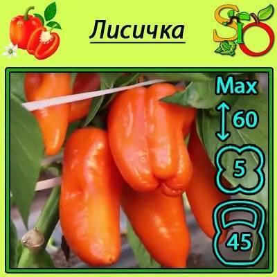 Очень яркий и удивительно вкусный перец «лисичка» для заготовок, вкусных блюд и употребления в свежем виде