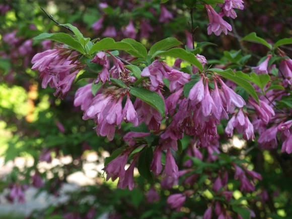 Красивые деревья для сада: фото, как подобрать, ухаживать, расположить