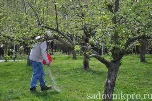 Подкормка плодовых деревьев и кустарников весной: чем и как удобрять