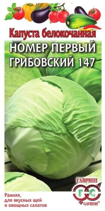 Описание капусты сорта грибовская - мыдачники