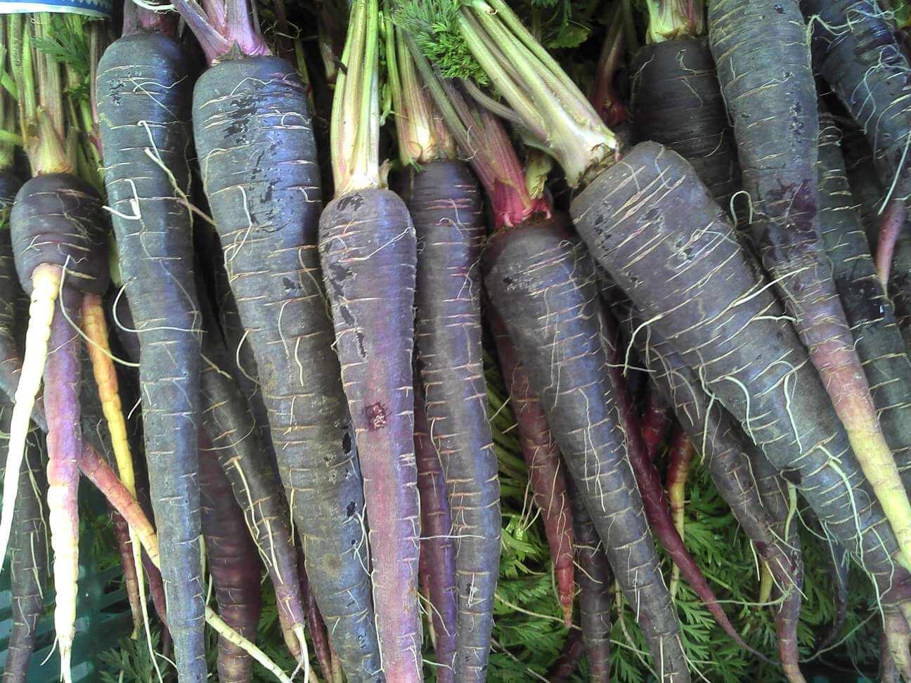 Что мы не знали про морковь интересная история моркови   огородники