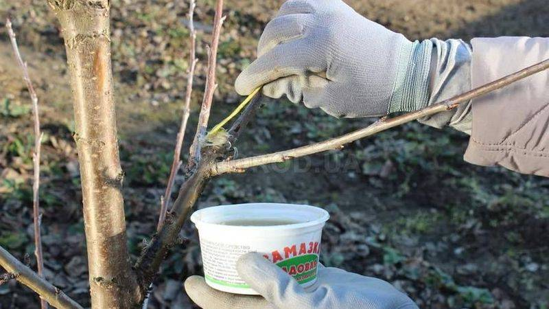 Как использовать садовый вар: инструкция по применению при обрезке деревьев