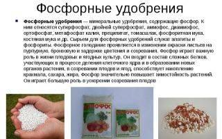 Фосфорные удобрения: какие бывают, виды, названия, особенности применения для сада и огорода