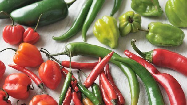 Самые лучшие сорта сладкого перца для теплиц и открытого грунта средней полосы: фото, описание и характеристики растений