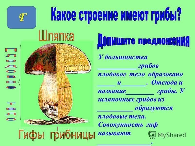 Строение гриба – от грибницы до шляпки - грибы собираем