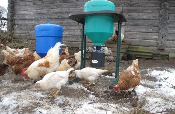 Автоматическая кормушка для птиц: как сделать своими руками бункерную самонаполняющуюся кормушку с дозатором?