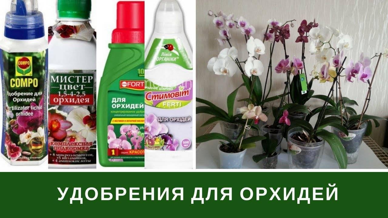 Удобрение для орхидей: популярные магазинные составы и лучшие народные средства + сроки и разновидности подкормок