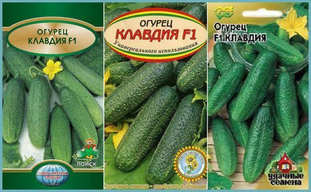 Огурец клавдия f1: отзывы, фото, описание сорта - блог фермера