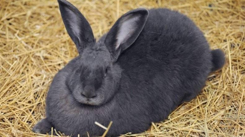 Когда спаривать крольчиху после окрола