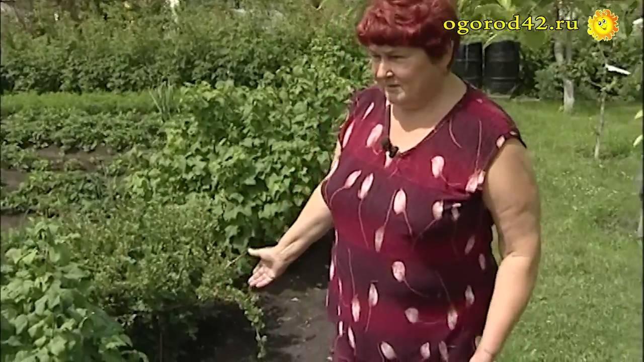 Дизайн садового участка 6 соток своими руками (79 фото): оформление дачного ландшафтного дизайна с грядками, как правильно посадить огород