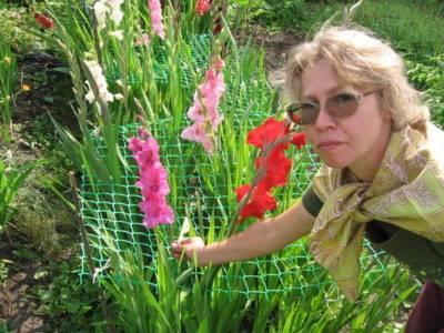 Гладиолусы в горшке: особенности посадки и ухода