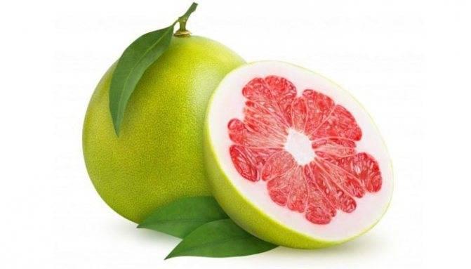 Как растет фрукт памело и выращивание его доиа