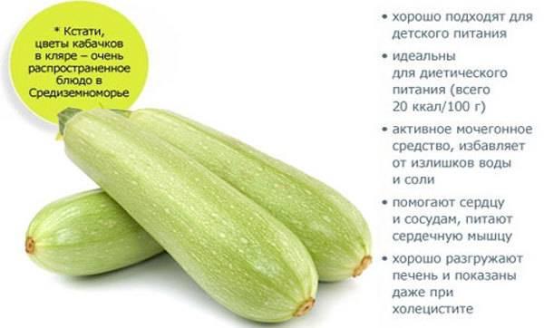 Витаминный состав кабачков
