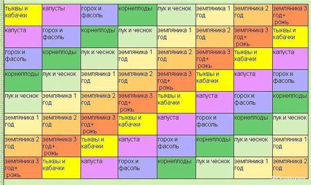 Севооборот овощных культур: таблица, предшественники овощей, организация чередования на даче
