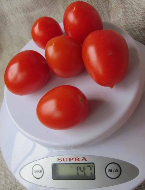 Черри ира: полное описание и советы по культивации мелкоплодного томата