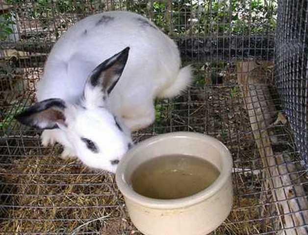 Как поить кроликов зимой на улице, а также суточная норма воды