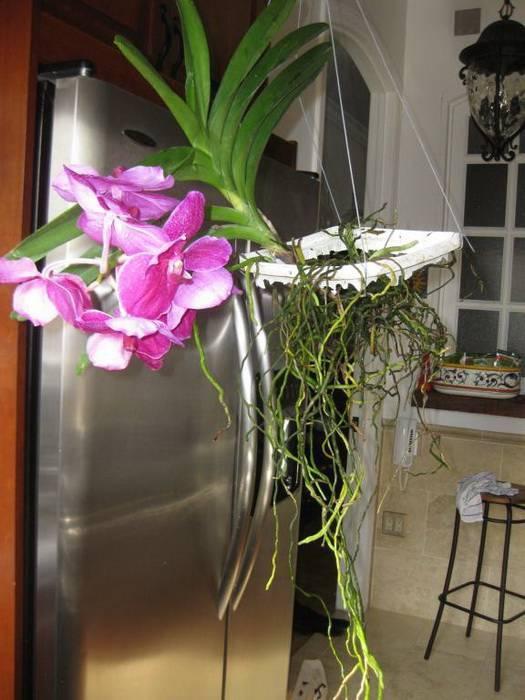 Орхидея в колбе (35 фото): как ухаживать за орхидеей в стеклянной вазе без земли? как выбрать капсулу или вазон?