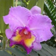 Секреты выращивания орхидей в домашних условиях, их особенности, а также видео, что делать, если она вываливается из горшка