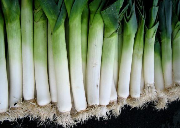 Как выращивать лук порей из семян через рассаду: посев, уход, хранение |