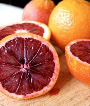 Виды апельсинов: фото и описание сортов