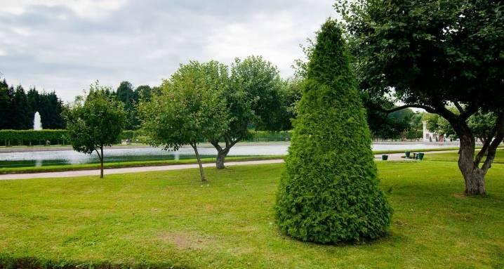 Что посадить вдоль забора на дачном участке: топ растений