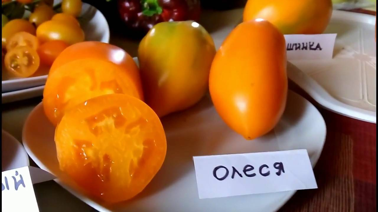 Характеристика томата сорта олеся