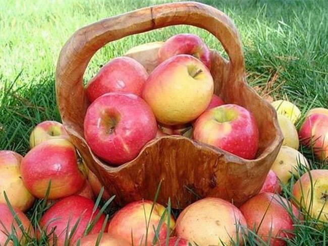 Сорт яблони услада: описание, фото