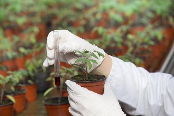 Лучшие стимуляторы роста растений - советы по применению