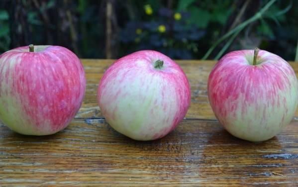 Сорта яблонь для башкирии: фото с названием и описанием