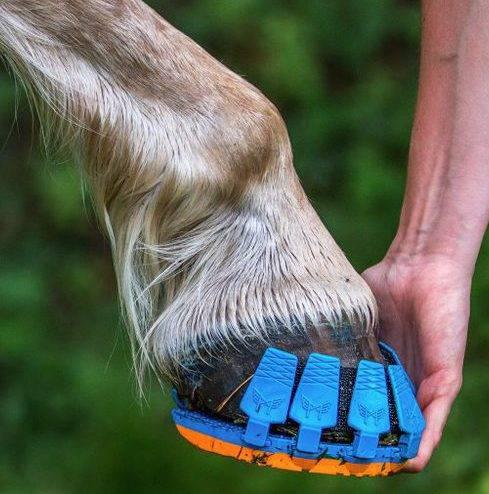 Зачем подковывают лошадей: как это делается рекомендации и советы