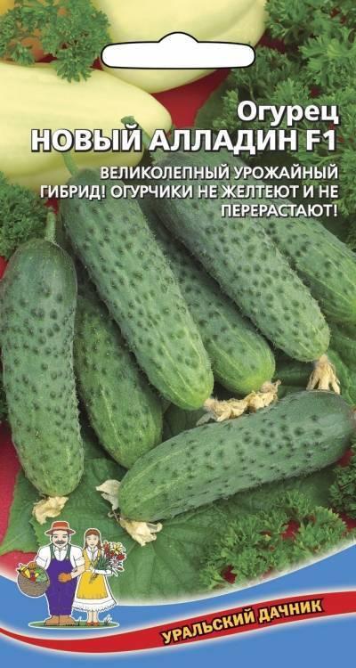 Огурец монастырский: описание сорта, выращивание, фото