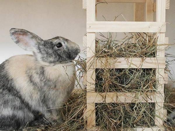 Маточник для кроликов своими руками: размеры, чертежи, фото