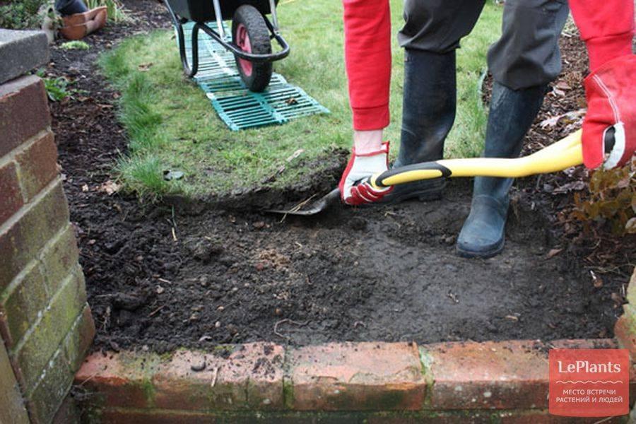 Как посадить газон своими руками: подробное руководство