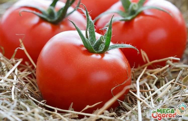 Штамбовые томаты: что это такое, описание и характеристика сортов (для открытого грунта и теплиц) | топ-30 лучших (фото & видео) +отзывы