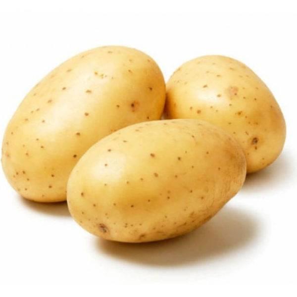 """Картофель """"метеор"""": описание сорта, фото, отзывы"""