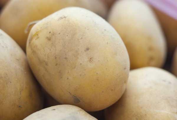 Сорта картофеля с большой урожайностью и высокими вкусовыми качествами