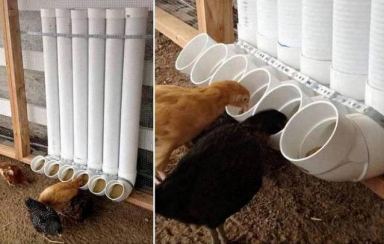 Делаем кормушки для куриц своими руками: пластиковые, бункерные, деревянные