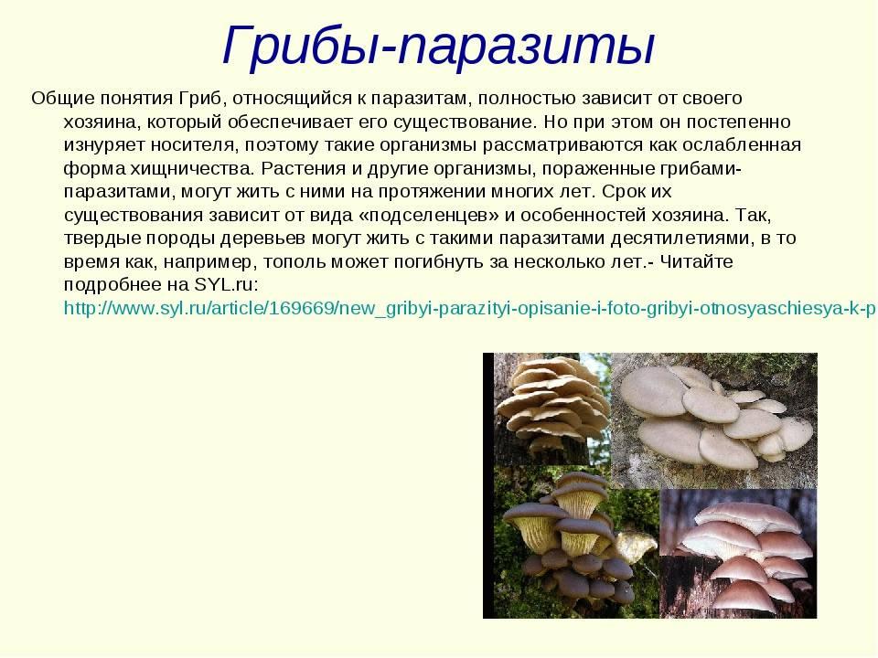 Грибы симбионты, сапрофиты и паразиты