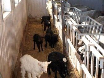 Описание овчарни, ее назначения, рекомендации по самостоятельному строительству помещения для овец