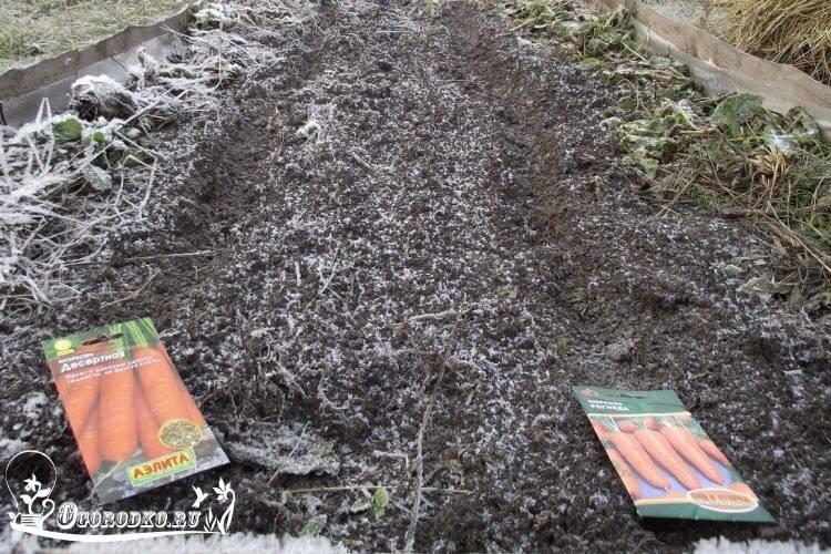 Посадка моркови под зиму: осенью, сроки посадки, сорта, инструкция, видео