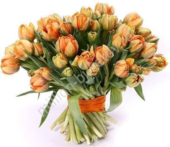 Все о пионовидных тюльпанах