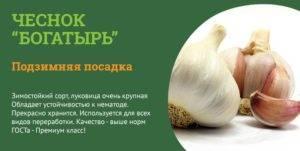 Сорта чеснока: описание, фото, отзывы