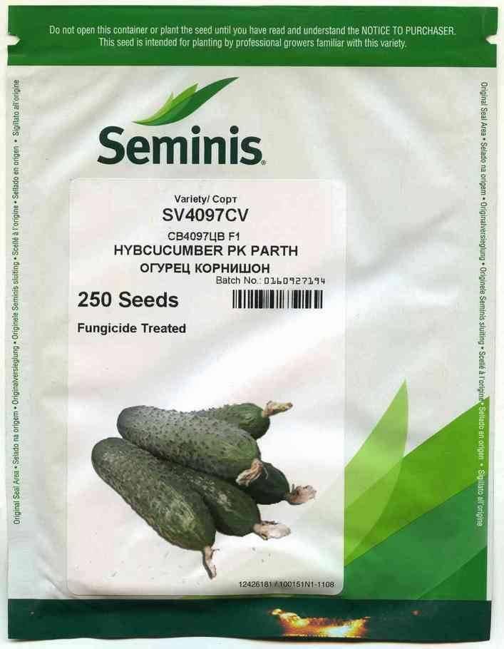 Огурцы св 4097 цв f1: все о сорте, отзывы, описание и фотографии, выращивание и уход