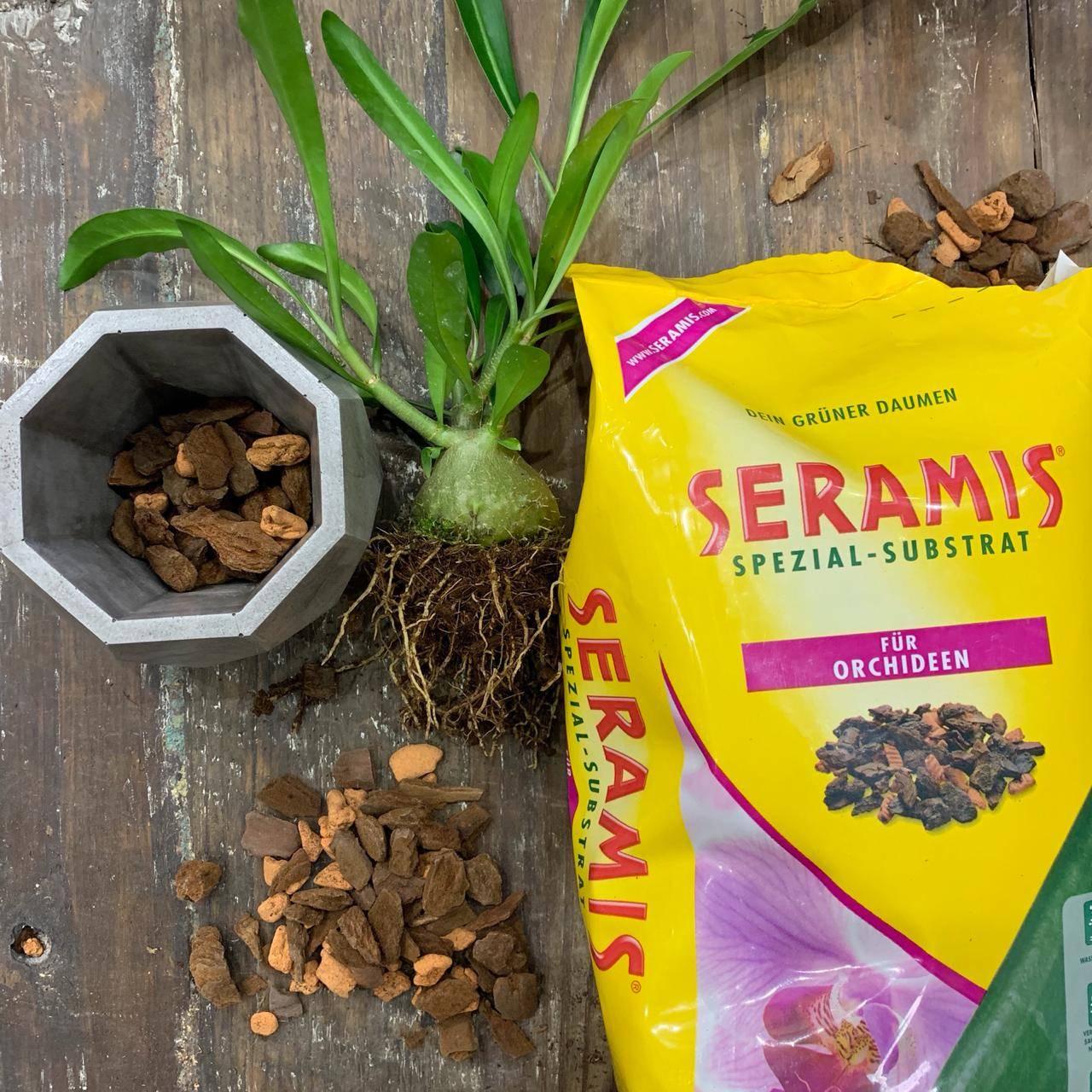 Серамис для орхидей: что это такое, каковы плюсы и минусы, состав, как проводить выращивание цветов в данном субстрате? русский фермер
