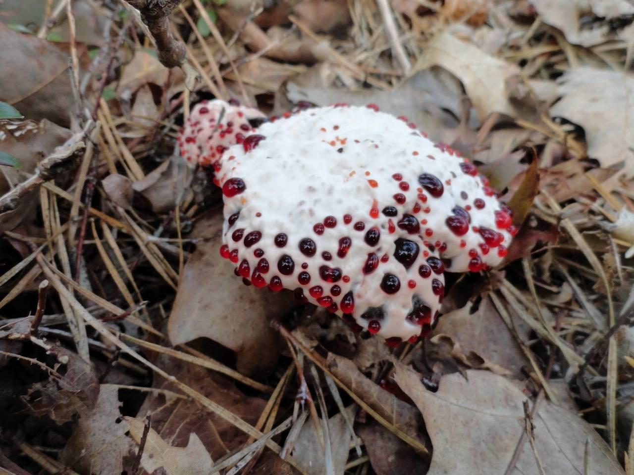 Удивительные виды грибов - zefirka