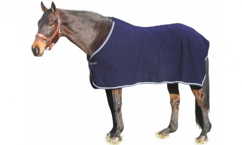 Попона для лошади: нужна ли она? и можно ли обойтись без нее?