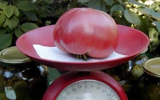 Томат розовый гигант — отзывы опытных огородников